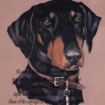 portrait of doberman in pastels